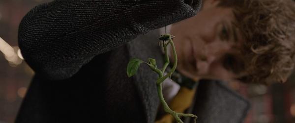 《怪獸2》紐特安撫「騶吾」這場戲原來是這樣拍的 去除特效真實場景小雀斑超尷尬!_(7).jpg